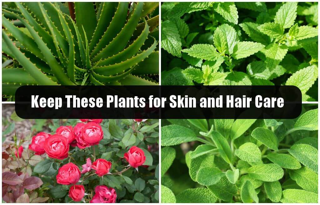 Plants for Skin and Hair Care